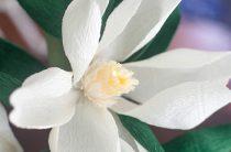 МК: цветы магнолии