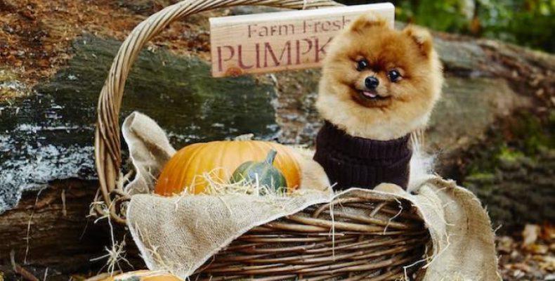 Фотосессия на Halloween